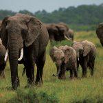 アボガド栽培か、ゾウの生息か
