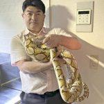 横浜のニシキヘビ逃走事件ですが